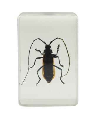 Celestron 44407 3D Böcek Örneği Seti - Thumbnail