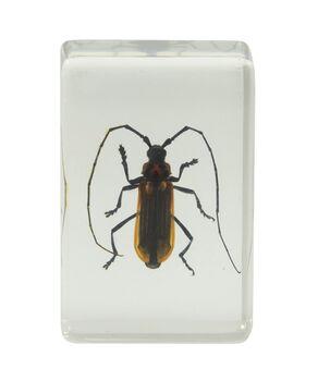 Celestron 44407 3D Böcek Örneği Seti