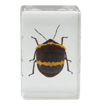 Celestron 44408 3D Böcek Örneği Seti