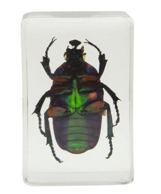 Celestron 44408 3D Böcek Örneği Seti - Thumbnail