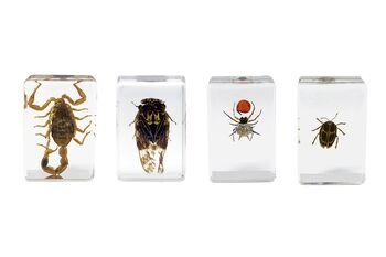 Celestron 44424 3D Böcek Örneği Seti
