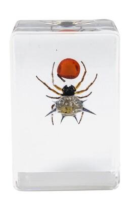 Celestron 44424 3D Böcek Örneği Seti - Thumbnail