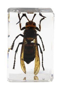Celestron 44425 3D Böcek Örneği Seti