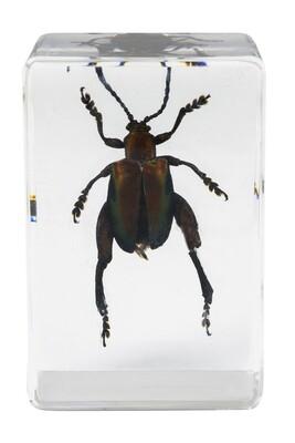 Celestron 44425 3D Böcek Örneği Seti - Thumbnail