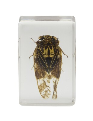 Celestron 44409 3D Böcek Örneği Seti - Thumbnail