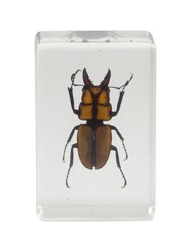 Celestron 44409 3D Böcek Örneği Seti